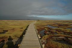 Boardwalk to one of the Geelbeck Hides